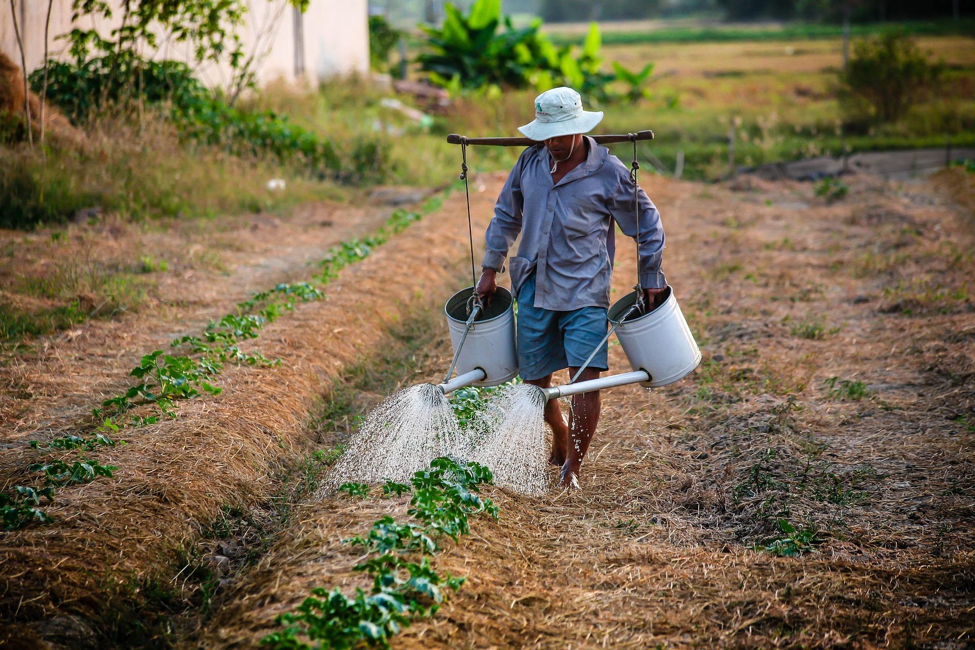 watering-1501209_1920