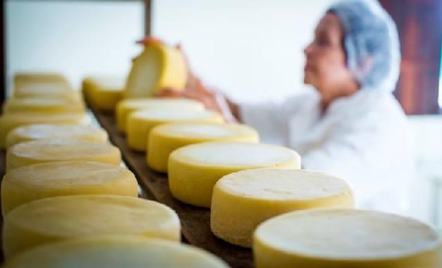 queijo artesanal dentro das normas selo arte