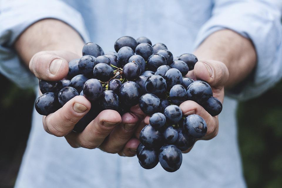 mão uva