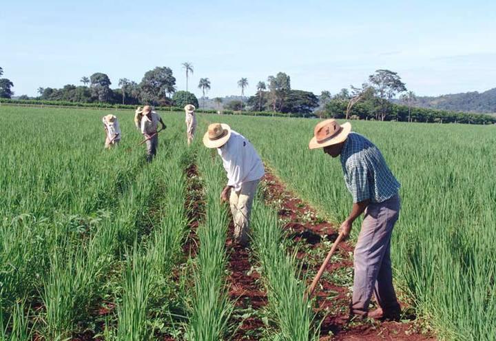 Agricultor Familiar