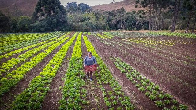 agricultor no campo secretaria de agricultura
