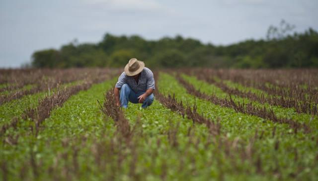 campo com agricultor