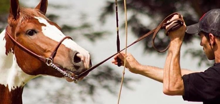 imagem de uma doma racional de cavalo marrom e um homem segurando as rédeas