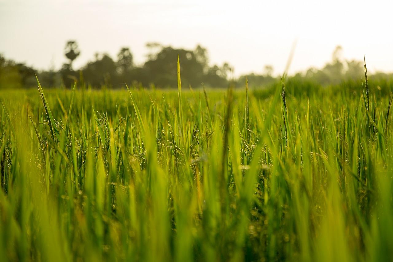 agricultura-crescimento-sustentavel