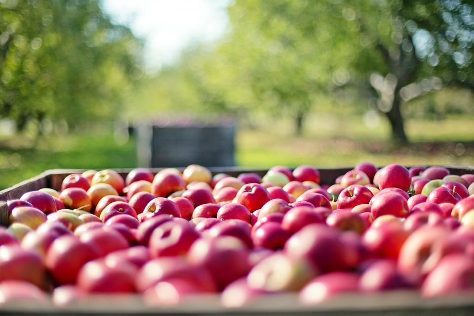 Gôndola marrom cheia de maçãs vermelhas com paisagem duas árvores de copa verde ao fundo