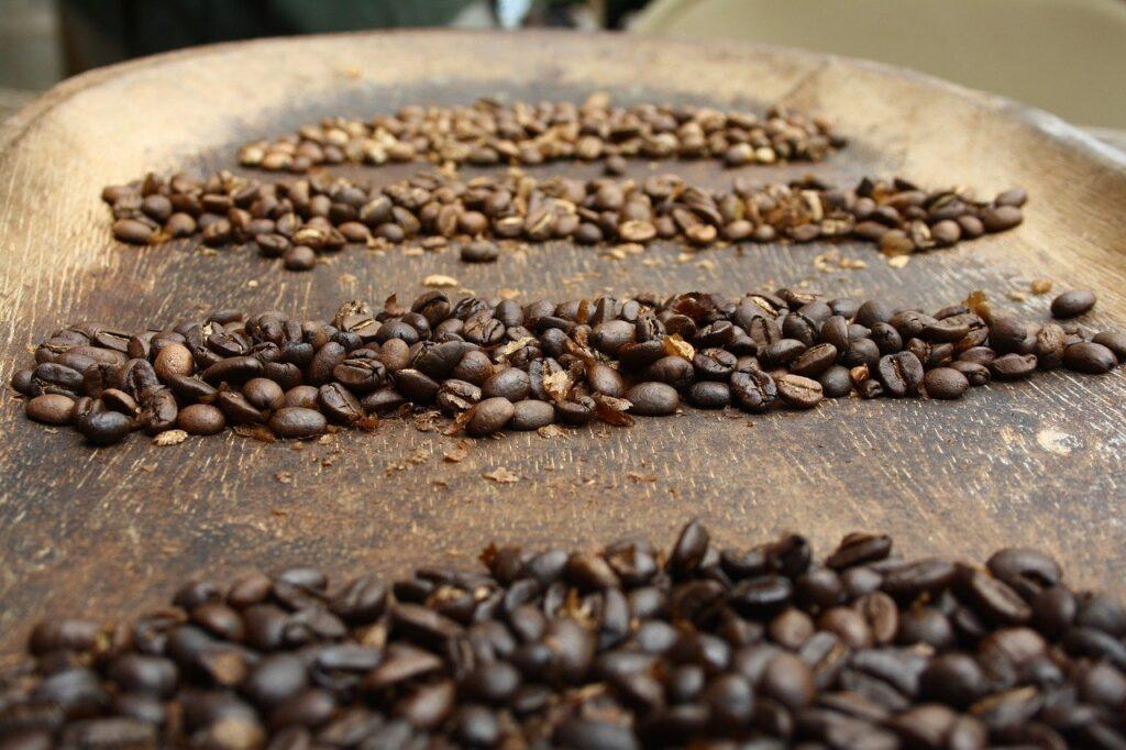 Três carreiras de grãos de café de cafeicultor de Caconde