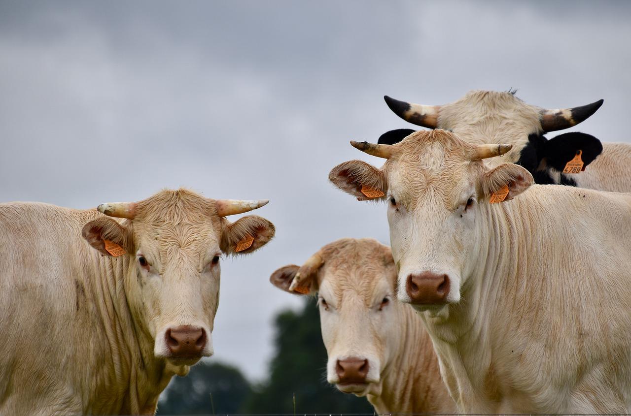 eficiencia-reprodutiva-pecuaria-de-leite-nacao-agro