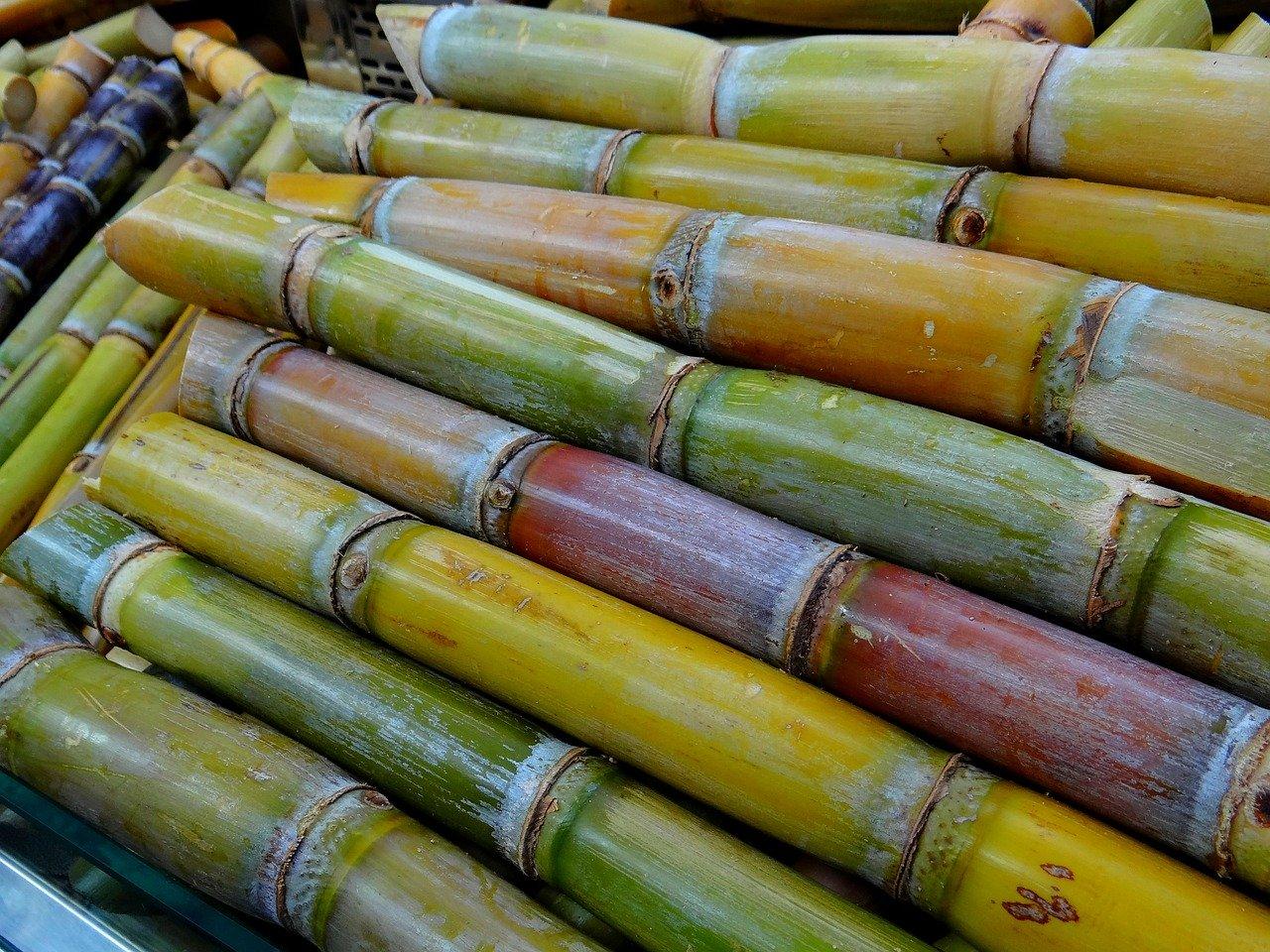 Pedaços de cana verdes, amarelos e marrons em mercado de cana