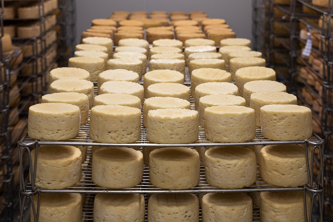 Peças inteiras de queijo expostas em prateleiras de armazém