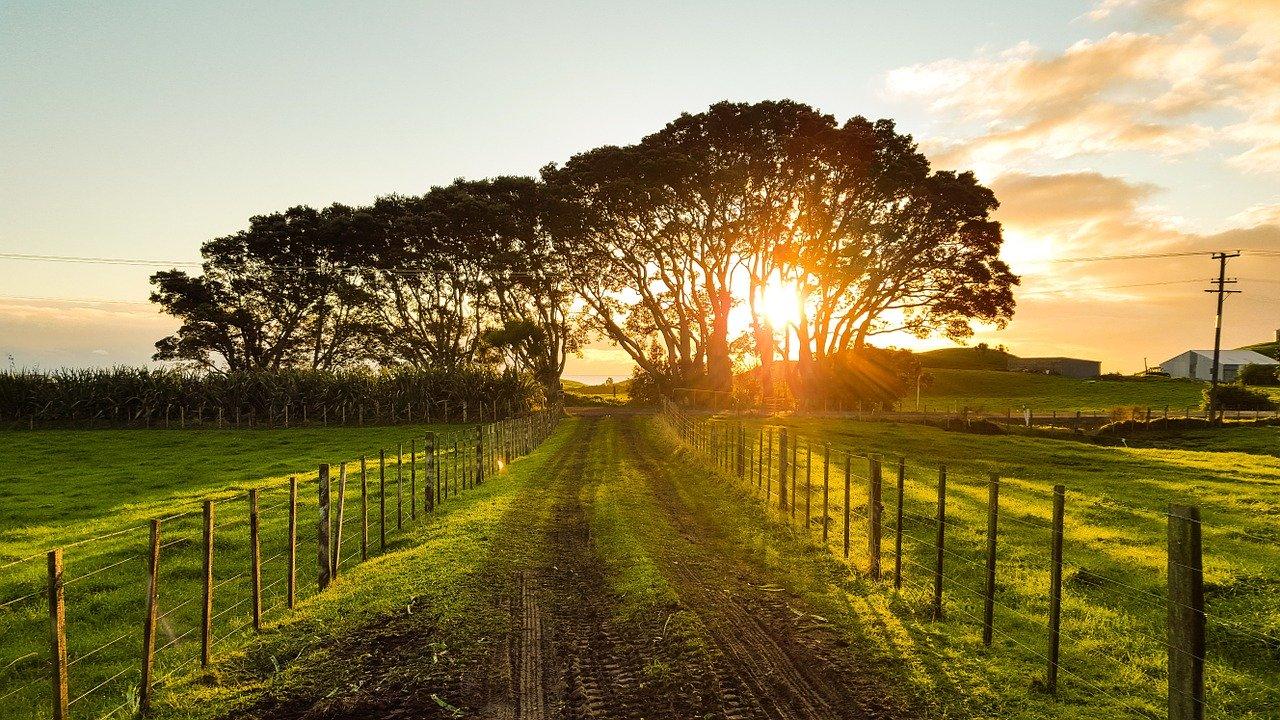 Paisagem de fazenda de turismo rural, com estrada de terra marrom no meio e pastos verdes nas laterias e pôr-do-sol entre copa de árvores