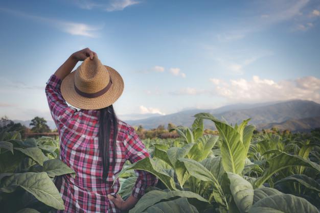 Produtora Rural no campo