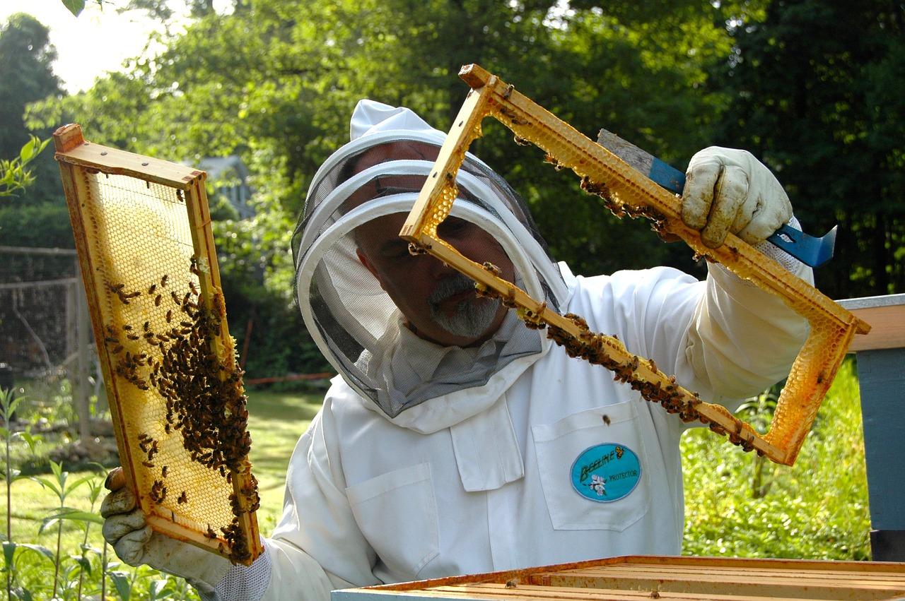 Dicas para montar apiário
