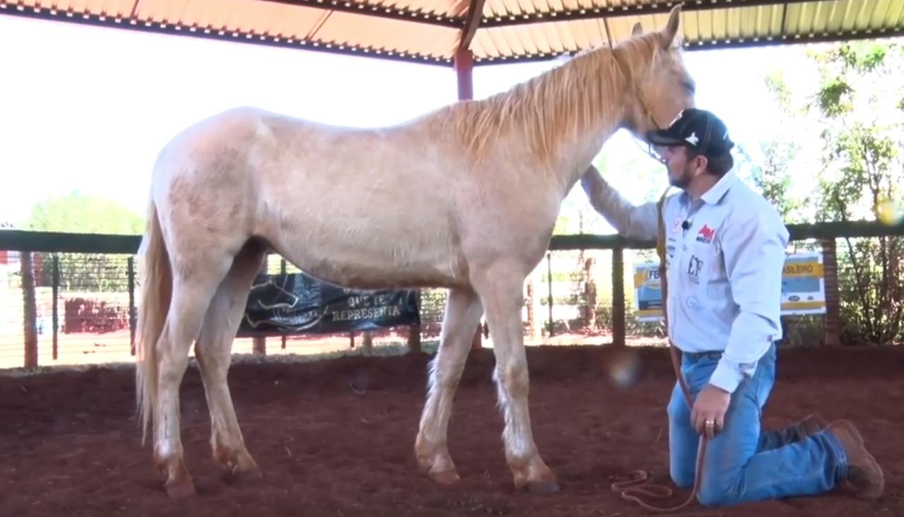 doma-racional-cavalo-foto