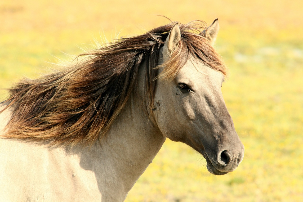 Cavalo pardo para doma racional