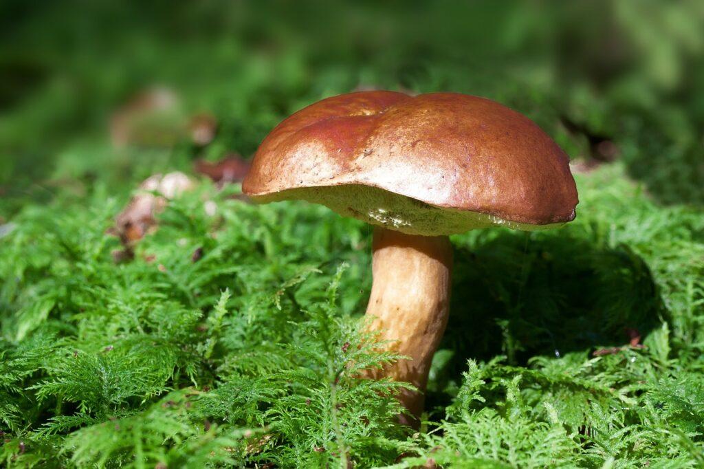 Cogumelo marrom sobre grama verde