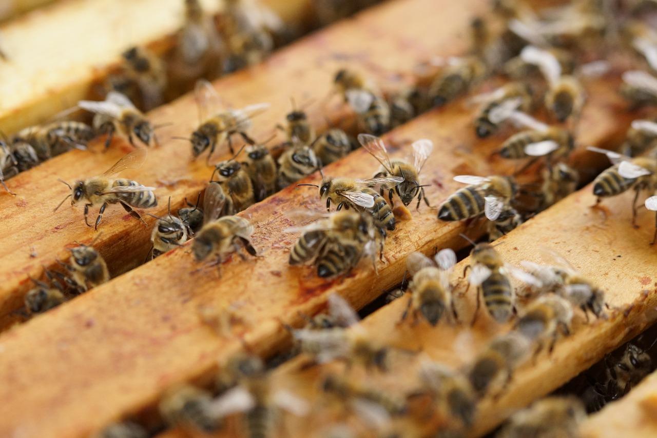 Abelhas em apiário em Sorocaba