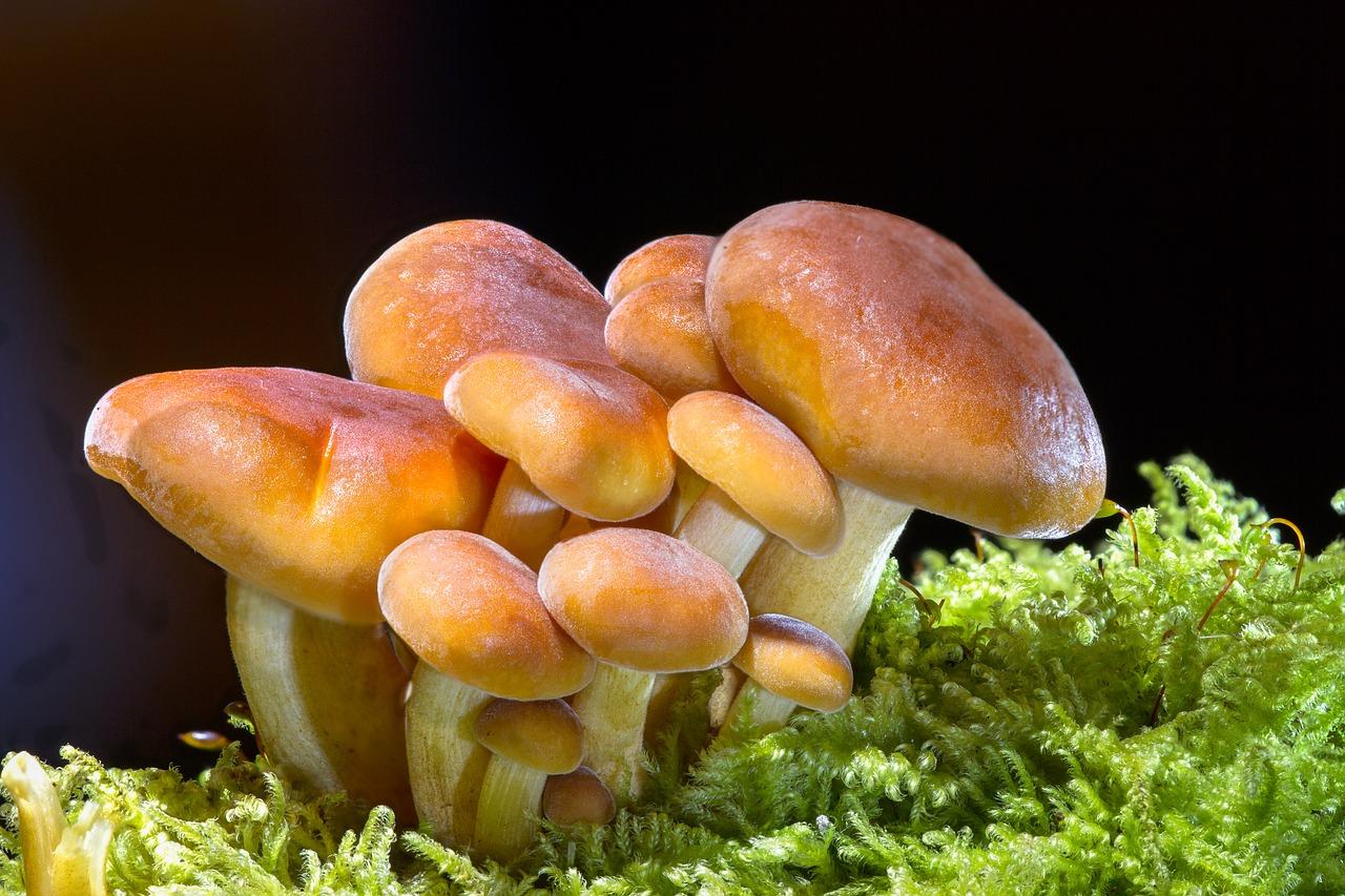 Cogumelos na cor caramelo