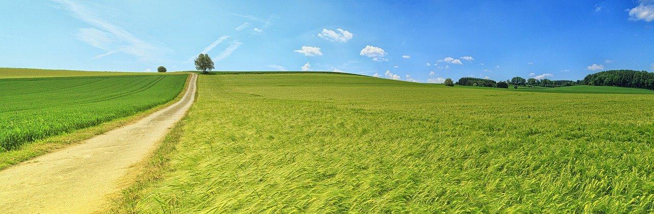 Paisagem de pasto verde em fazenda em post sobre DAP