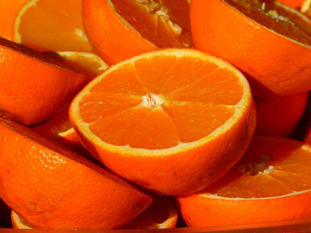 Colheita de laranjas na Flórida