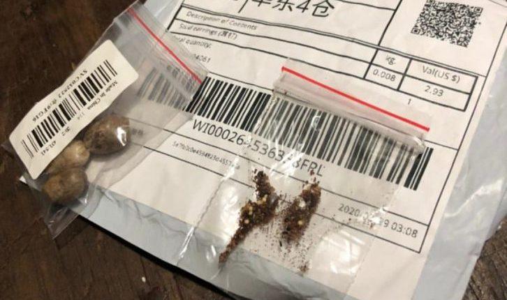 pacotes brancos com sementes clandestinas marrons