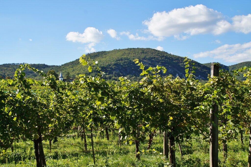 Parreiras em Itobi são opção de turismo rural