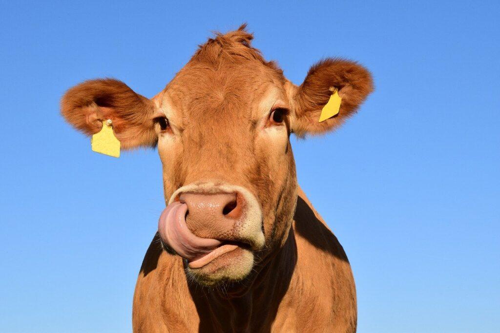Evento sobre pecuária leiteira acontece em Santa Rita do Passa Quatro