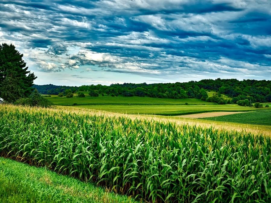 Proprietários de imóveis rurais podem aderir ao PRA a partir de 2 de janeiro de 2021