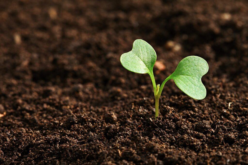Dia mundial do solo: 3 passos para melhorar a fertilidade da terra