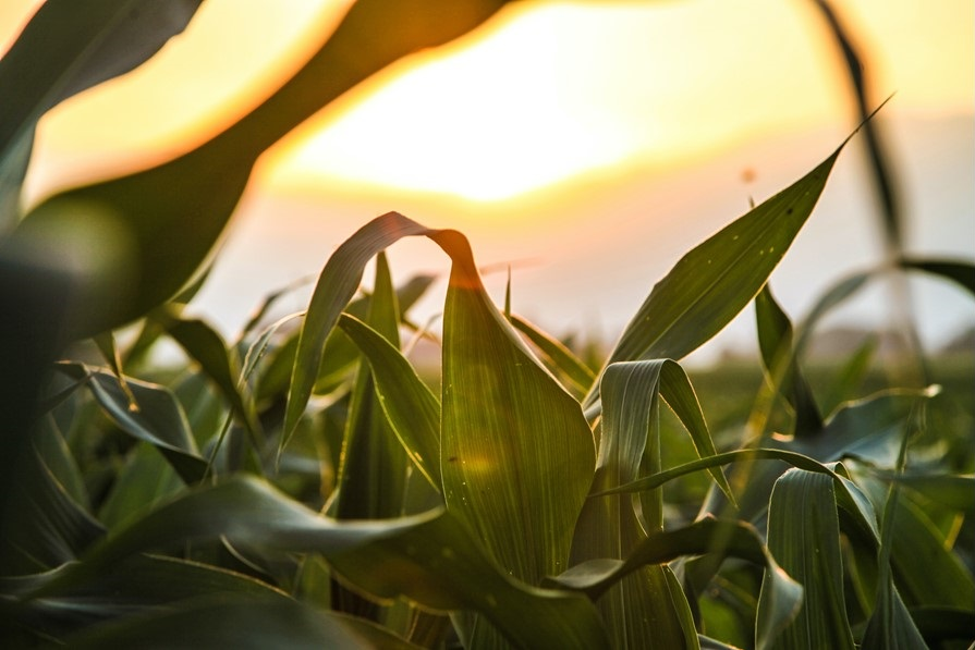 Fundação de Apoio à Pesquisa Agropecuária faz alerta para as condições climáticas para 2021