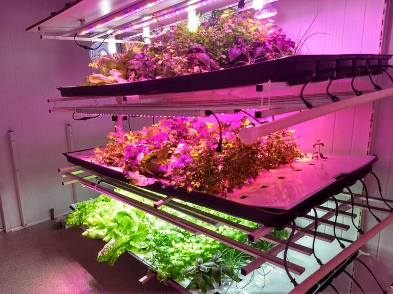 Hortas comunitárias e fazendas verticais são alternativas para agricultura em áreas urbanas