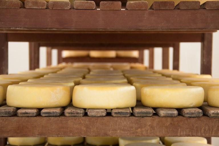 Mapa colhe sugestões sobre regras para a elaboração de queijo artesanal