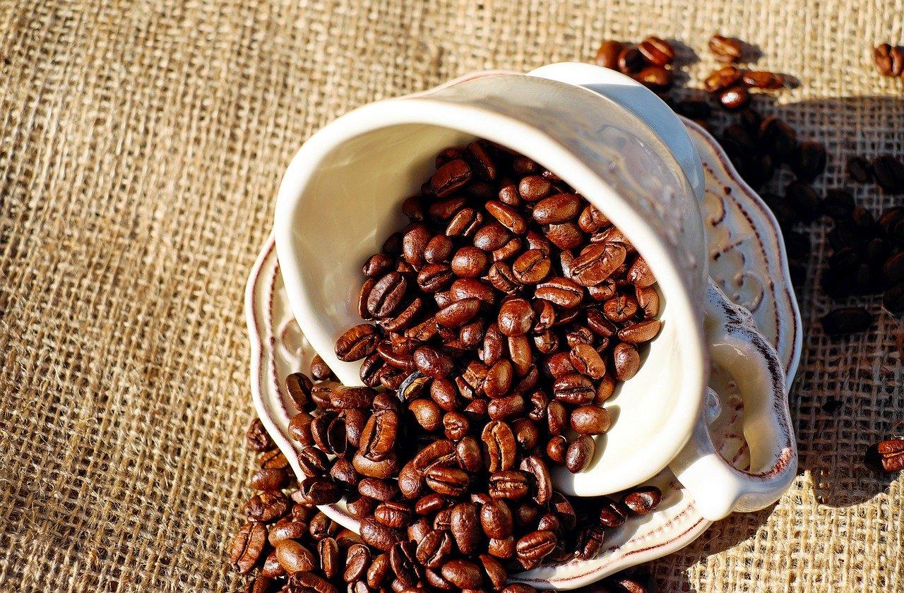 Conheça o passo a passo para cultivo e comércio de café