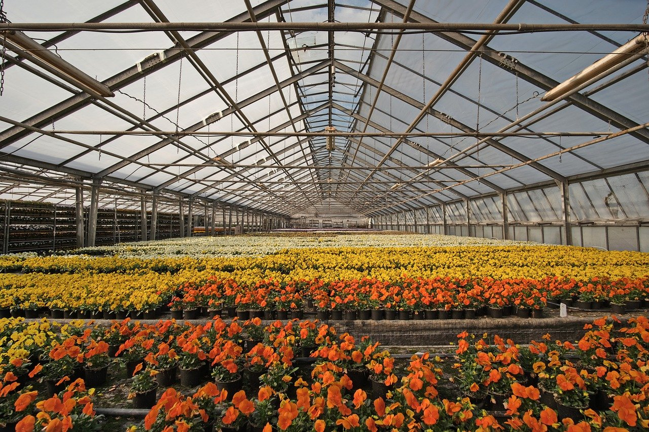Estufa garante produção de hortaliças em períodos de chuvas