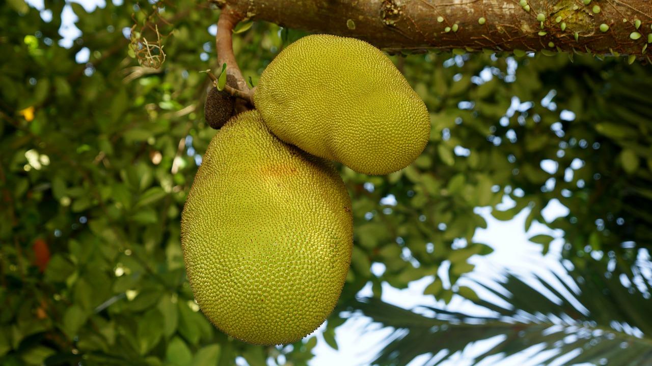 Conheça as frutas singulares que são colhidas em janeiro