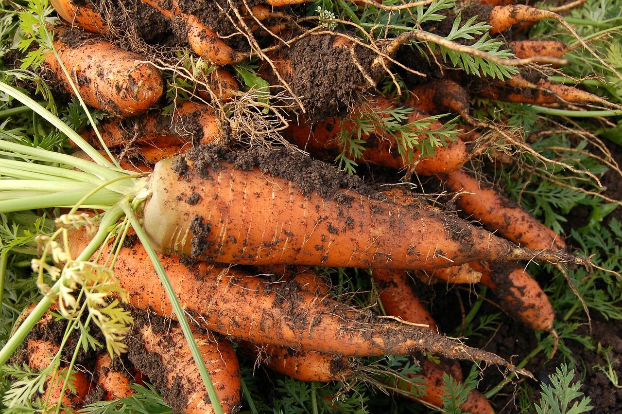 Horta caseira: veja o que plantar no verão na região Sudeste