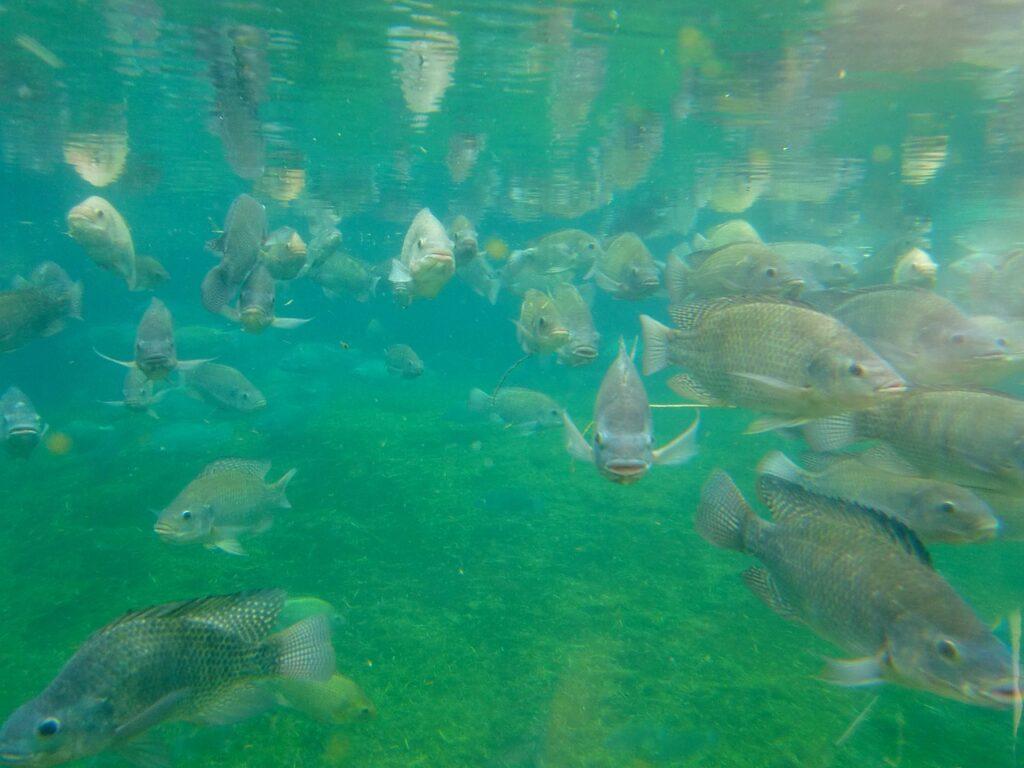 Curso do SENAR-SP ajuda produtores a aumentar produção e renda na piscicultura