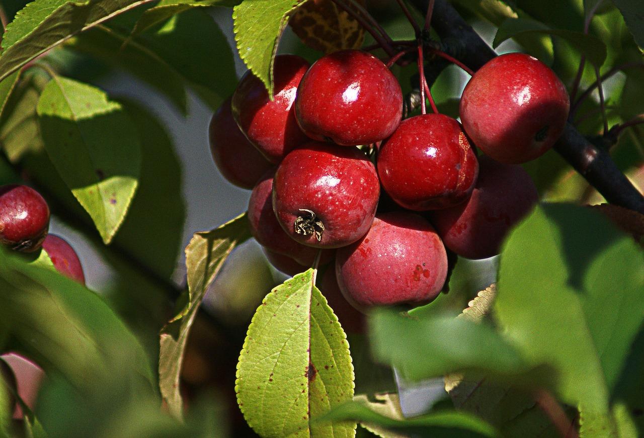 SENAR: inscrições para cursos técnicos em fruticultura e agronegócio se encerram hoje