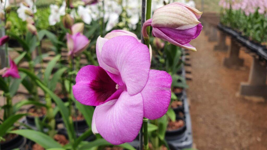 Setor de flores deve se reerguer após quase um ano de pandemia