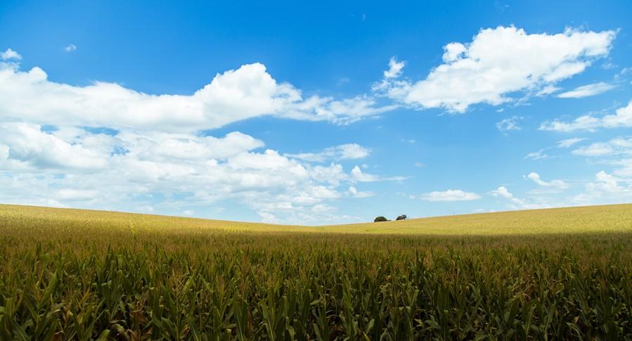 Governo de SP concede R$ 27 milhões para subvenção de Seguro Rural