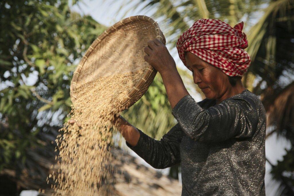 Conheça a história de mulheres que fazem a diferença na agricultura familiar