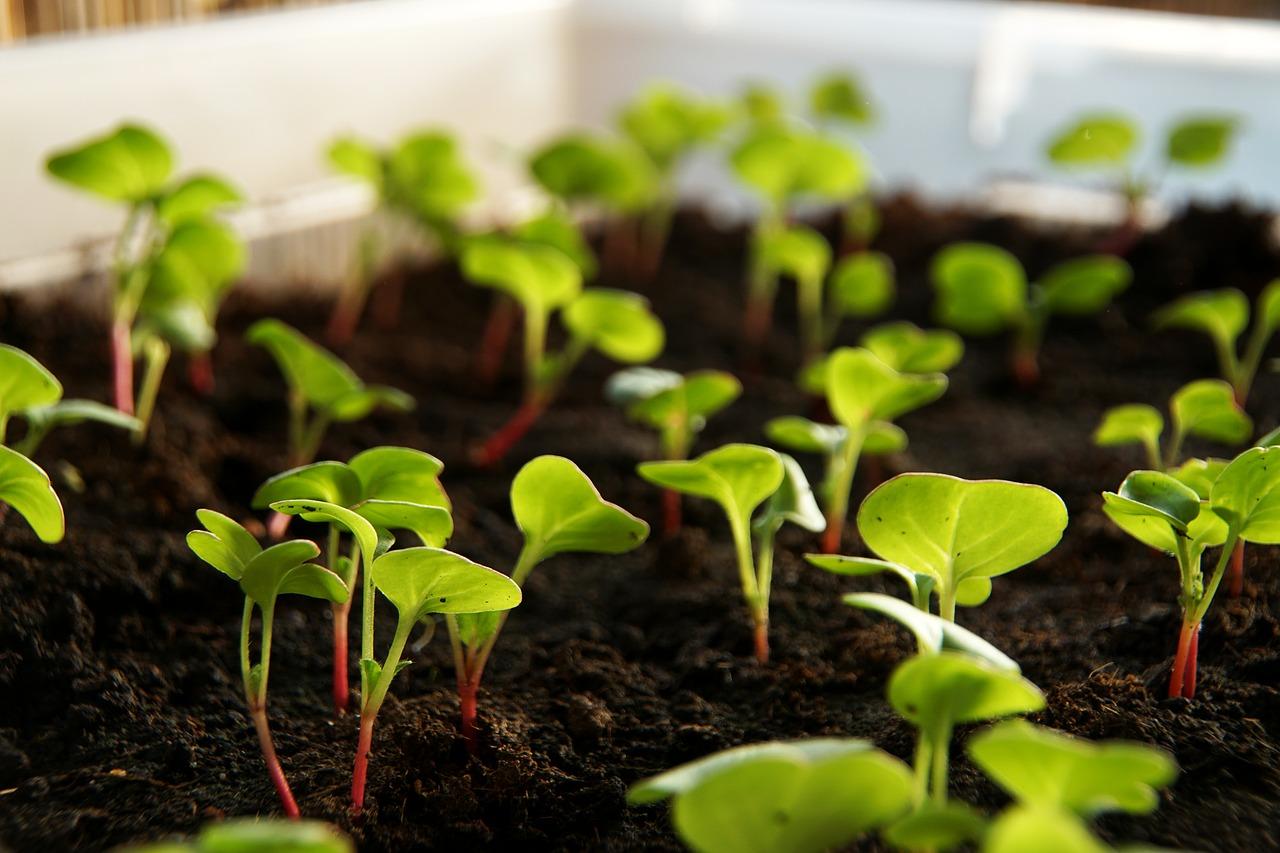 Confira 7 espécies para plantar em sua horta no inverno
