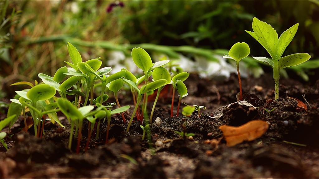 Inoculação: conheça os benefícios da técnica para a agricultura