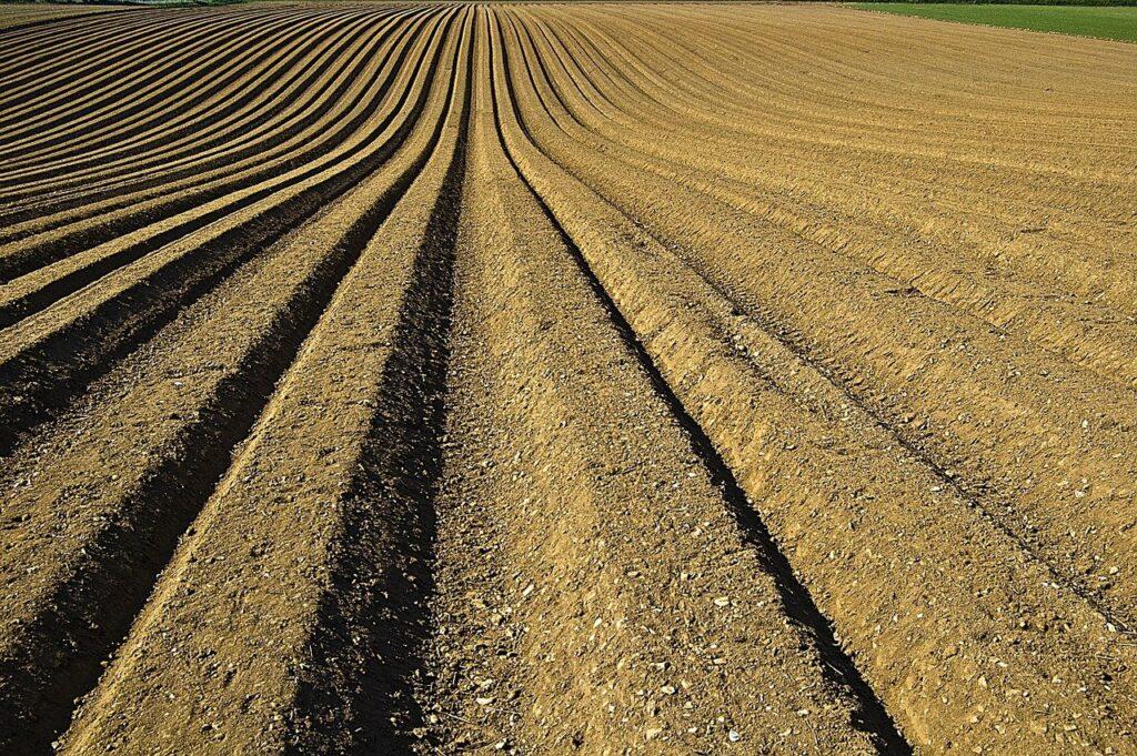 SENAR-SP: novo curso ensina como tratar o solo com microrganismos