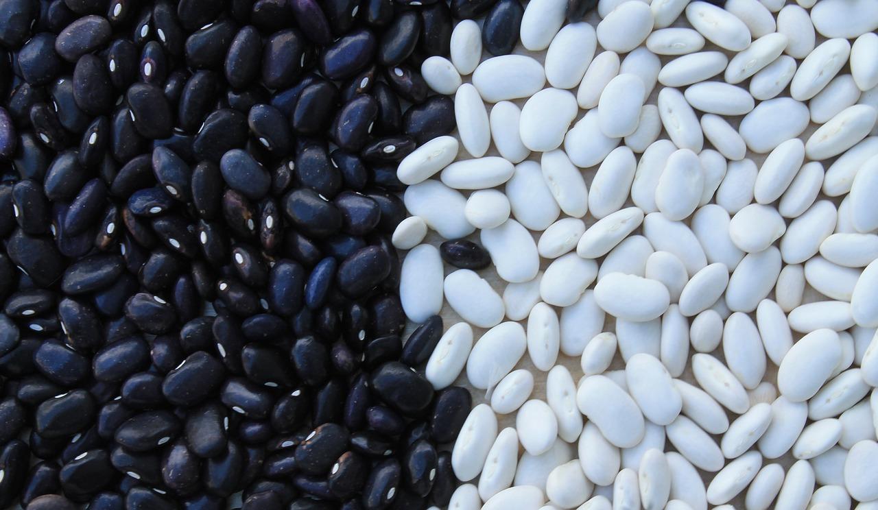 Pulses: conheça as vantagens da produção e consumo das leguminosas secas