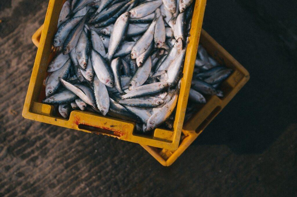 Cancelamento da Santa Feira do Peixe preocupa piscicultores de São Paulo