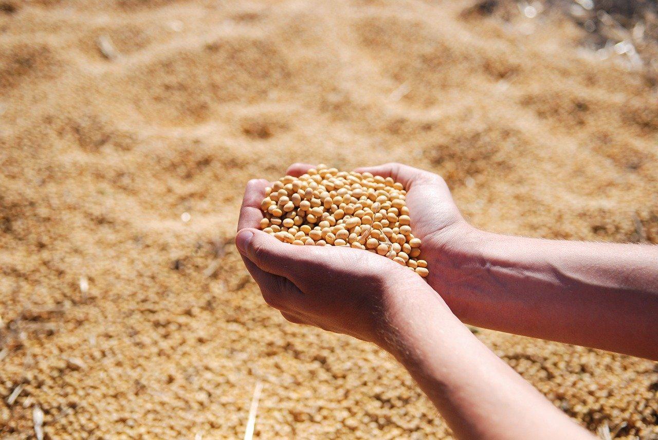 Pontal do Paranapanema inicia colheita da soja; região aumentou cultivo