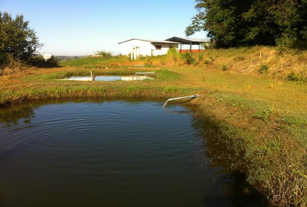 Confira 5 dicas para evitar perda de água em viveiro escavado