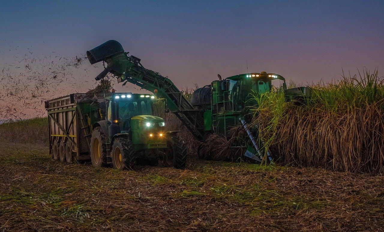Cana-de-açúcar: colheita mecanizada bem-feita pode ajudar a evitar perdas