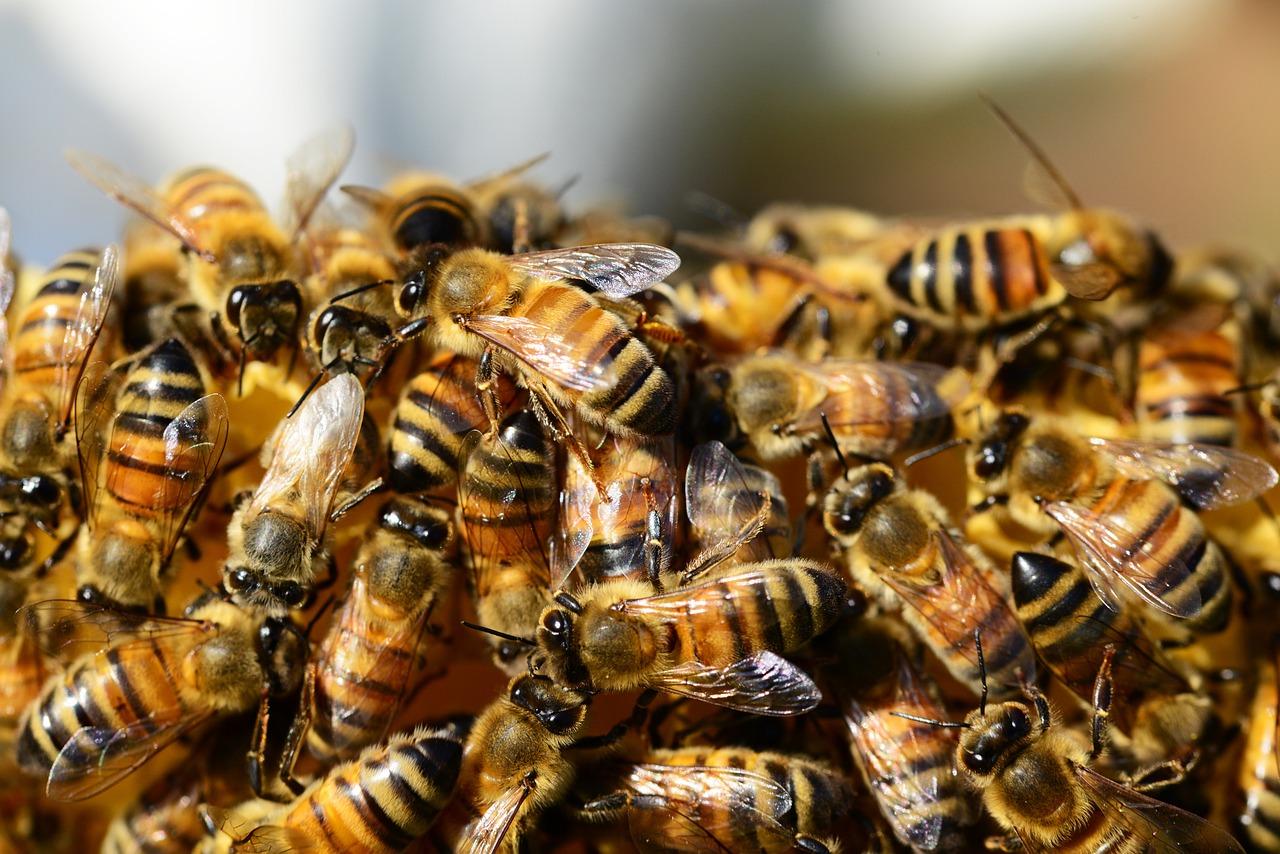 Curso de apicultura do SENAR-SP garante renda extra a produtores rurais