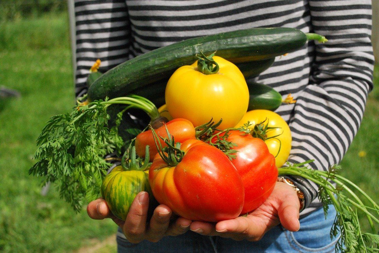 Confira 4 passos para iniciar uma horta orgânica
